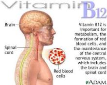 vitamine-b